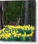 A Deer And Daffodils 4 Metal Print