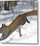 A Devil Named American Red Squirrel Metal Print