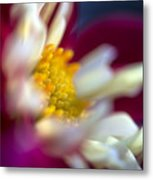 A Different Kind Of Dahlia Metal Print