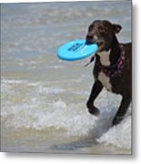 A Dog And Her Frisbee Metal Print