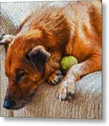 A Dog And His Tennis Ball Metal Print