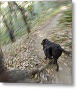 A Dog Backpacking On Pine Ridge Trail Metal Print