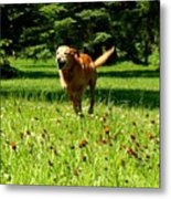 A Dogs Freedom Metal Print