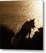 A Dogs View Metal Print