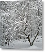 A Dogwood Sleeps While The Snow Falls Metal Print