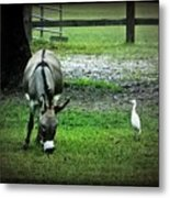 A Donkey And His Bird Metal Print