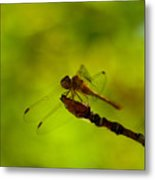 A Dragonfly Smile Metal Print