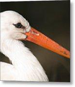 A European White Stork At The Lincoln Metal Print