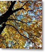 A Falling Maple Leaf Metal Print