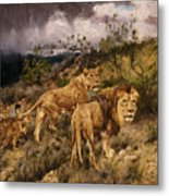 A Family Of Lions Metal Print
