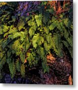 A Fern Botanical By H H Photography Of Florida Metal Print