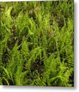 A Field Of Ferns Metal Print