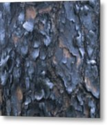 A Fire Scarred Tree Trunk Whose Thick Metal Print