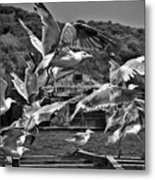 A Flock Of Seagulls Flying High To Summer Sky Metal Print