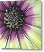 A Flower's Day Metal Print