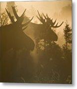 A Foggy Morning Metal Print by Tim Grams