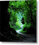 A Forest Trail Metal Print