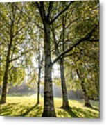 a Forest part 1 Metal Print