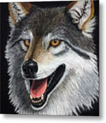 A Friendly Wolf Metal Print