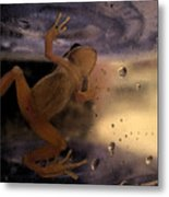 A Frogs World Metal Print