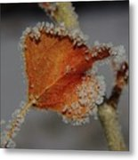 A Frosted Leaf  Metal Print