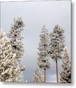 A Frosty Morning 2 Metal Print