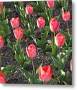 A Garden Full Of Tulips Metal Print