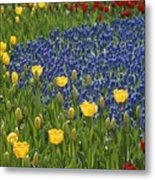A Garden Of Colorful Tulips And Grape Metal Print
