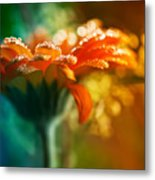 A Gift From God Metal Print