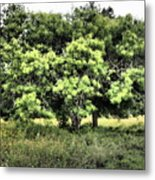 A Glimpse Of Nature Metal Print