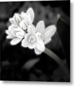A Glowing Daffodil Metal Print