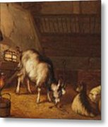 A Goat And Two Sheep In A Stable Metal Print