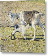 A Goat With Her Kid Metal Print