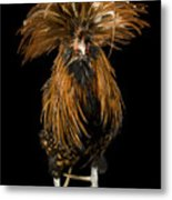 A Golden Polish Chicken Metal Print