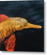 A Graceful Turn Metal Print