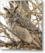 A Great Horned Owl's Wide Eyes Metal Print