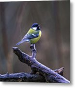 A Great Tit In The Rain Metal Print
