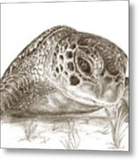 A Green Sea Turtle In Earthtones Metal Print