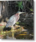 A Greenie With Reflection Metal Print