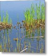 A Greening Marshland Metal Print