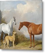 A Grey And A Chestnut Hunter With A Deerhound Metal Print