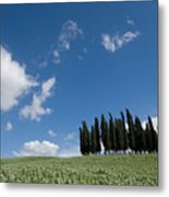A Group Of Cypress Trees Dot A Tuscan Metal Print