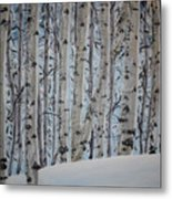A Grove Of Aspens Metal Print
