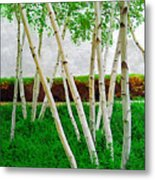 A Grove Of Birches 1 Metal Print