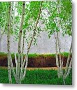 A Grove Of Birches 2 Metal Print