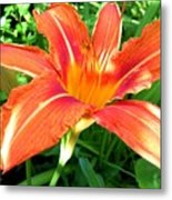 A Grrreat Tiger Lily Metal Print