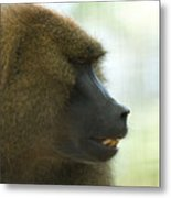 A Guinea Baboon At The Lincoln Metal Print