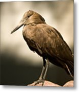 A Hammerkop At The Lincoln Childrens Metal Print