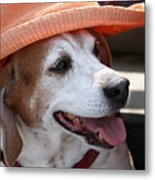 A Hat For Buddy Metal Print