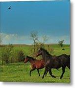 A Hawk And Horses In Kansas Metal Print